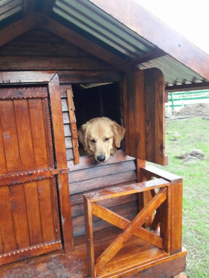 Casa En Madera Para Perro Grande - $ 5.300,00 en Mercado Libre