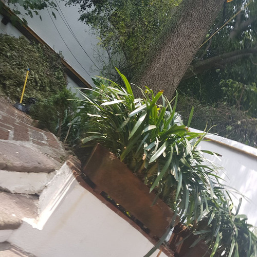 casa en renta en coyoacan francisco sosa