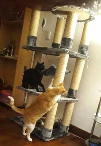 casa gimnasio rascador de gato