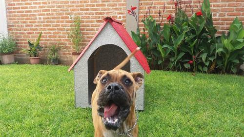 casa grande para mascota perro ecológica de alta duración