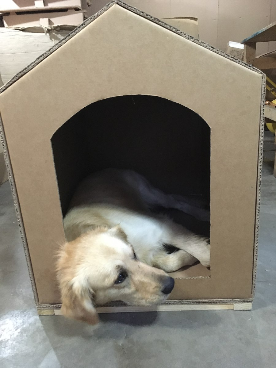 Casa hecha de carton para perro de razas medianas 220 - Mascotas en casa ...
