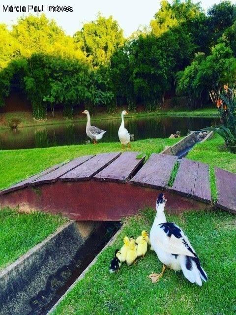 casa no condomínio nature village ii - jardim ermida - jundiaí - ca02899 - 34587247