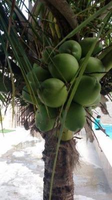 casa no jardim das palmeiras, em itanhaém 500 metros do mar