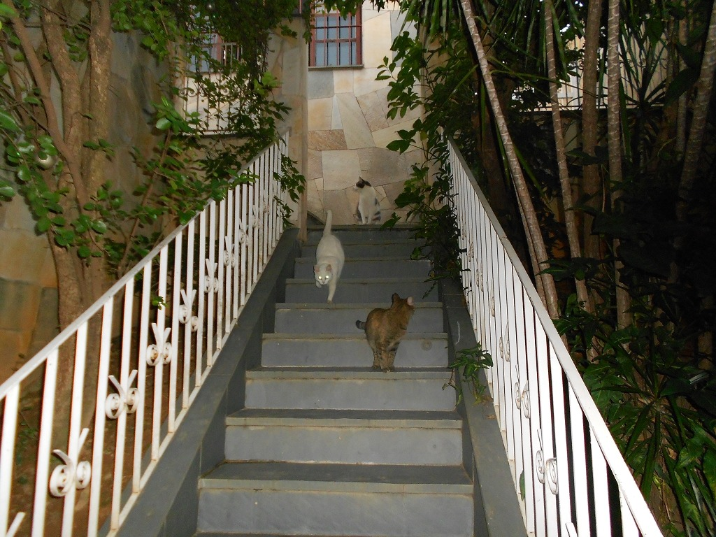 casa para venda, 3 dormitórios, jardim cidade pirituba - são paulo - 4678