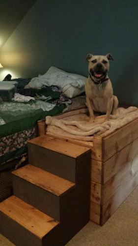 casas camas para perros gatos