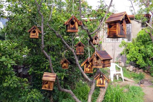 casitas de aves en libertad y vivero.