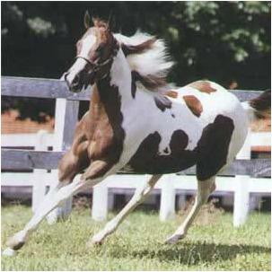 casqueamento e correção dos aprumos (cavalos muares) 1 dvd k