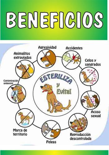 castracion -esterilizacion de mascotas  a muy bajo costo