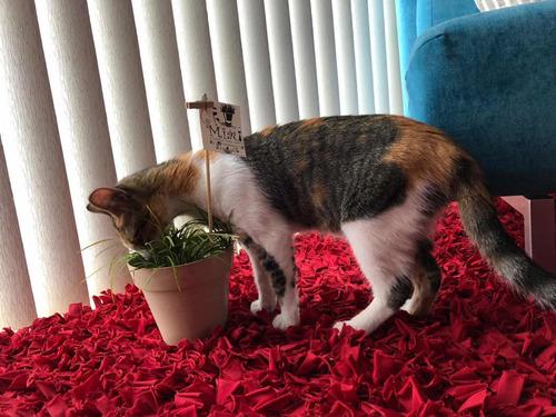 catgrass gatos y perros