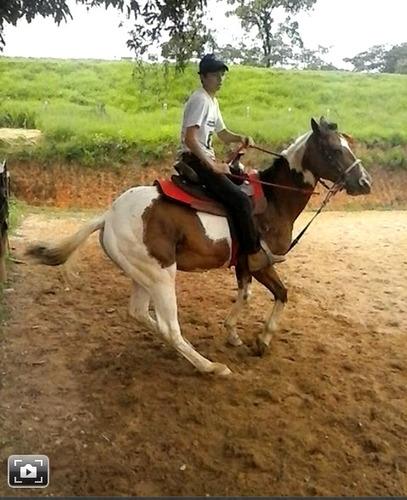 cavalo paint horse !!