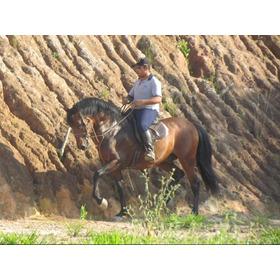 Cavalo Puro Sangue Lusitano