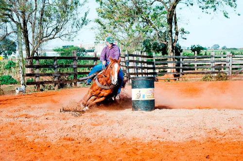 cavalo - quarto de milha - treinado em tambor - e laço