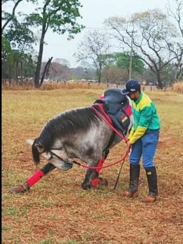 cavalo warlander