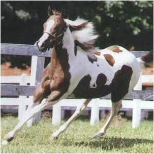 cavalos 3 dvd´s - monty roberts + redeas + casqueamento aer
