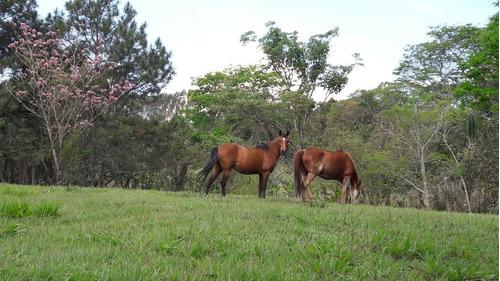 cavalos (nicoly)