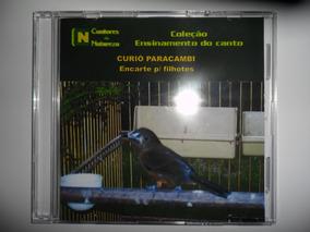 BAIXAR CURIO CD DE CANTO VITETEU