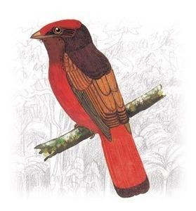 cd harpa paraguaia e os pássaros vol2. original