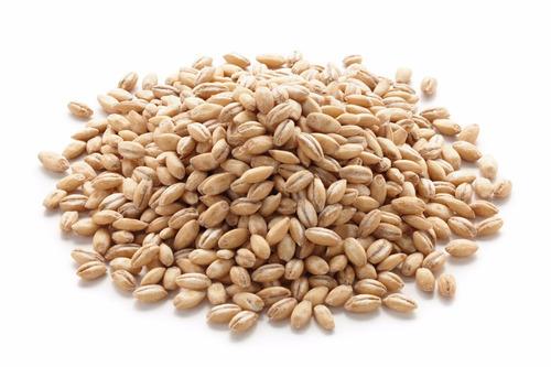 cebada pelada semillas cereales trigo maiz avena pastos vici