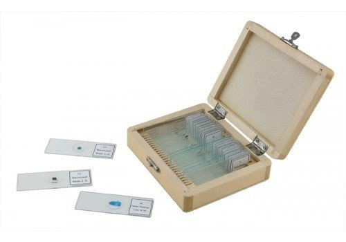 celestron no. diapositivas preparadas del microscopio (sist