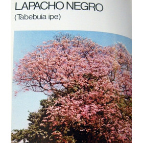 Celulosa Argentina Libro Del Árbol 2 Tomos 1976 No Envio