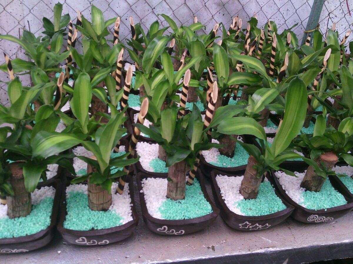 Centros d mesa baby shower auto design tech for Centros de mesa con plantas naturales