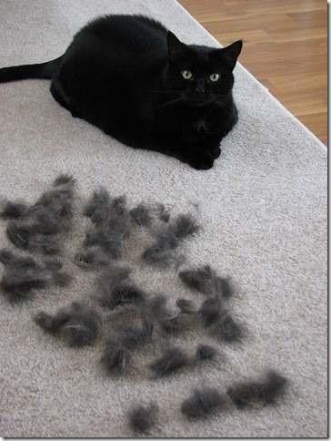 cepillo deslanador gatos grandes furminator pelo corto.