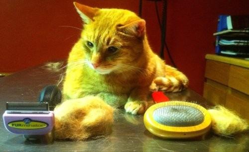 cepillo deslanador gatos pequeños furminator pelo corto