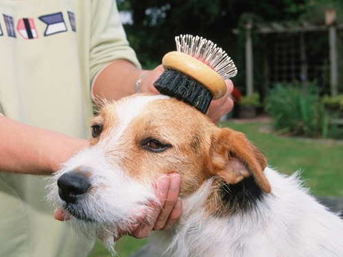 cepillo perro doble cara bambú mediano mx 025 limpieza
