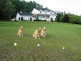 cercos invisibles para perros pet safe lideres desde 1999