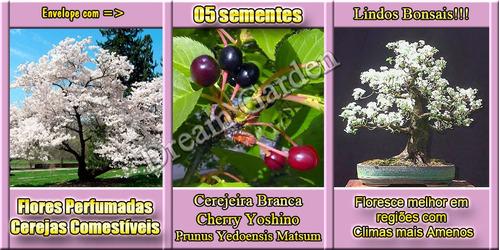 cerejeira branca prunus sementes flor para mudas e bonsai