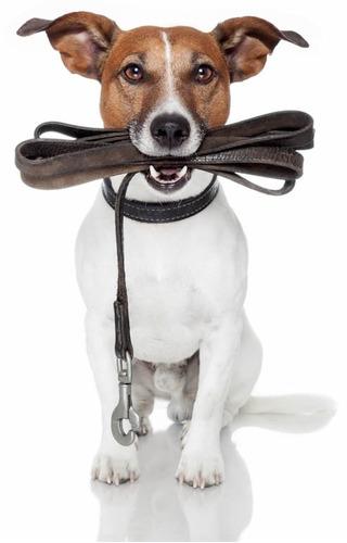 cesar millan y bruce fogle adiestramiento canino 4libros