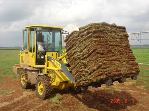 Cesped natural en alfombras c sped grass pasto 60 for Alfombras persas usadas precios