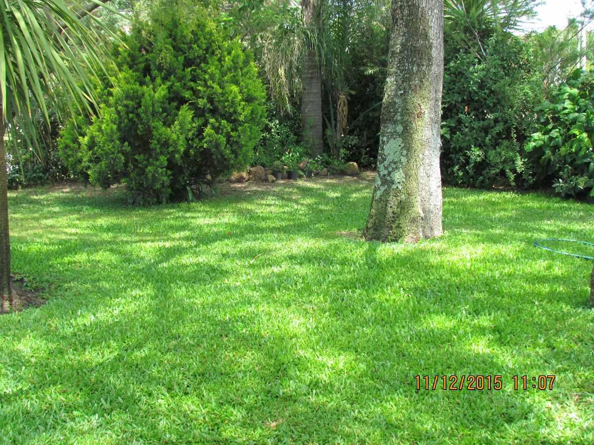 Cesped pasto jardines venta y colocaci n 10 00 for Jardines con cesped