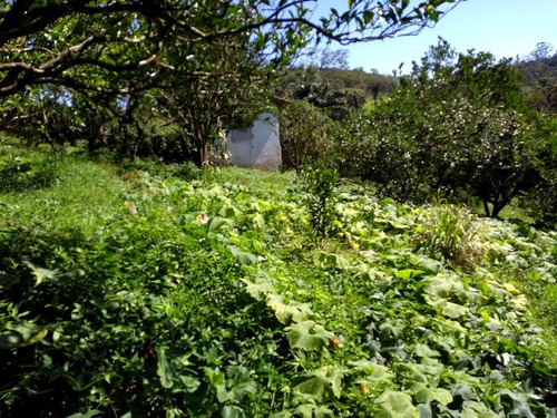 chácara / 20.000 m² / plantações / lago / pomar
