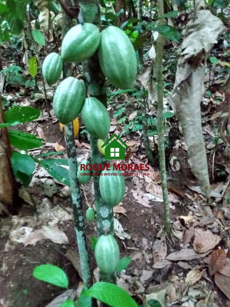 chácara, 3 alqueires paulista, plantações diversas. ref:0066
