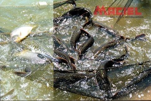 chácara a venda lago 5000 m² com criação de peixes