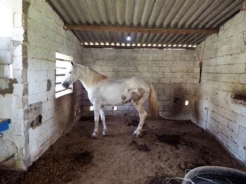 chácara bem localizada toda gramada baia p cavalo