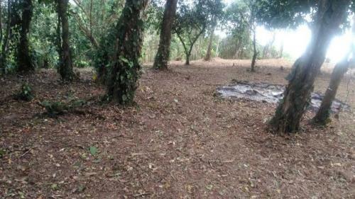 chácara c/ amplo terreno no litoral, itanhaém-sp! confira