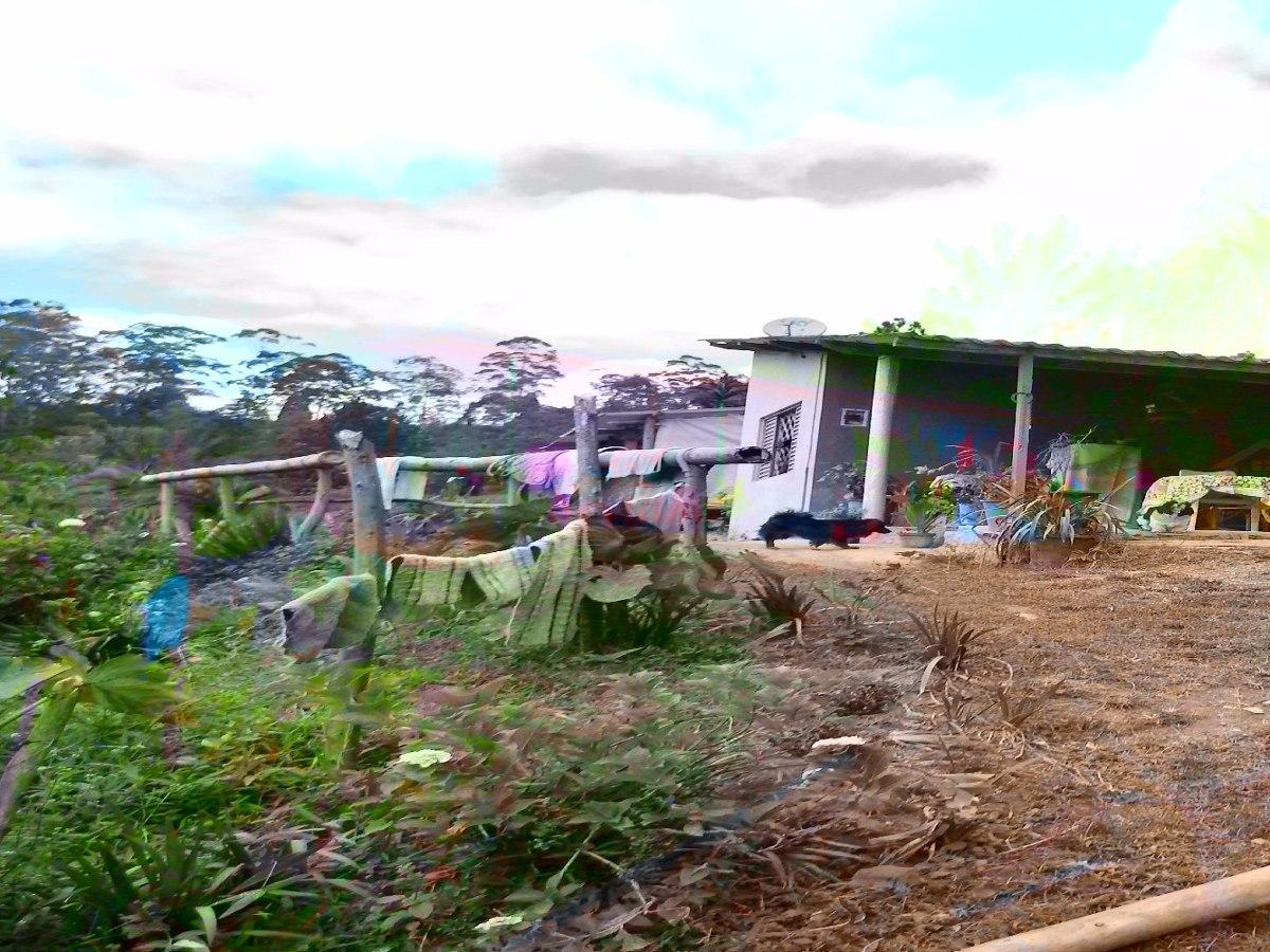 chácara com plantação de eucalipto em juquitiba