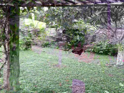 chácara com riacho de água cristalina terreno plaino
