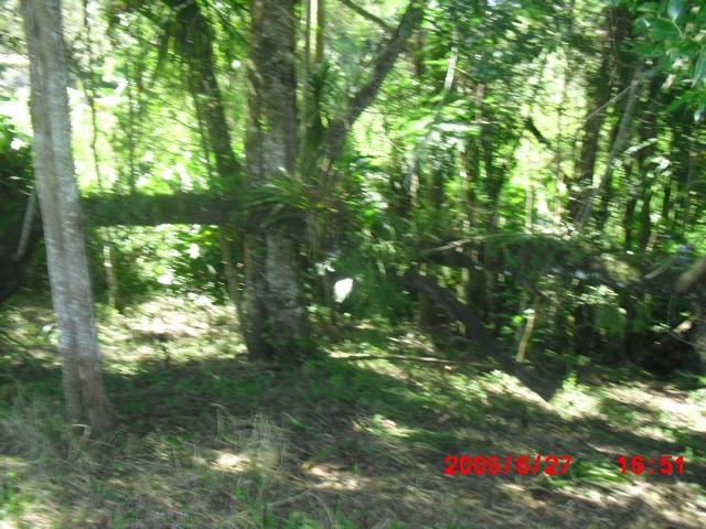 chácara em formação c/ riacho nos fundos