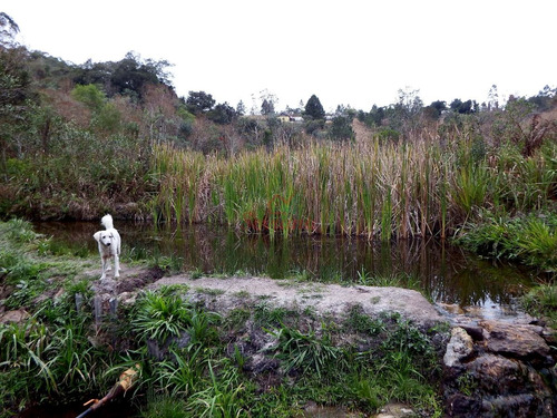 chácara em juquitiba 1 lago 2 tanques e nascente própria