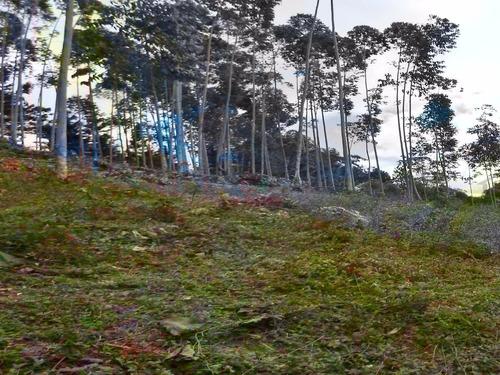 chácara em juquitiba 20.000 m² com plantação de eucalipto