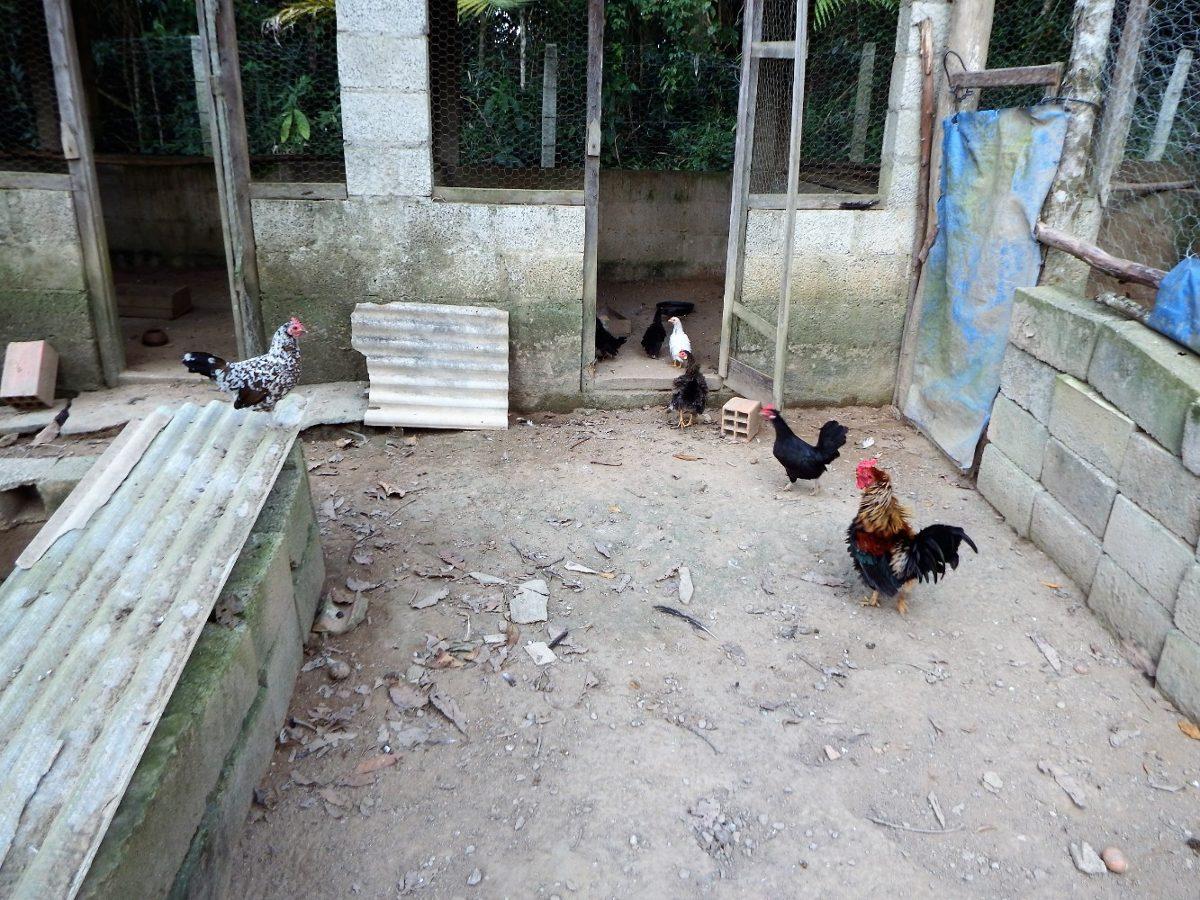 chácara em juquitiba fácil acesso pomar já produz