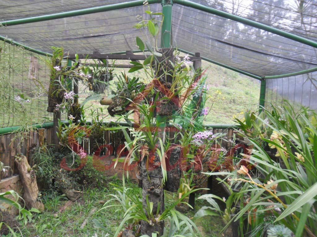 chácara em juquitiba ótima localização pequeno pasto