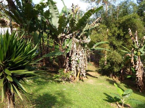 chácara em juquitiba toda gramada plantação de abacaxi