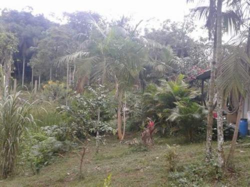 chácara em miracatu-sp, terreno medindo 5000 m²! confira