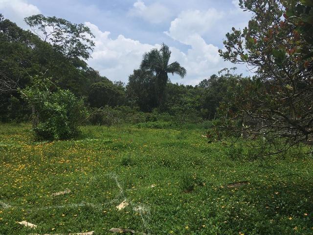 chácara no jardim das palmeiras, em itanhaém, litoral sul sp