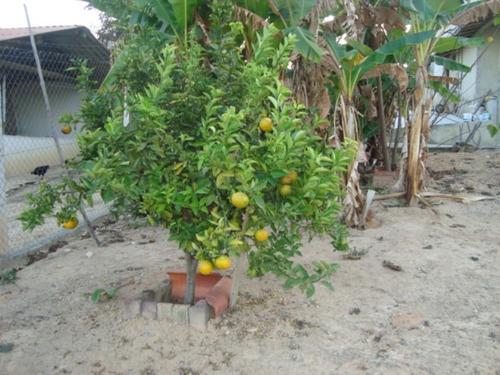 chácara rural ? venda, vila ipê amarelo, contagem - ch0003. - ch0003