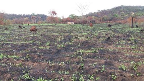 chácaras a partir de r$ 130mil com 02 hectares(20.000m2) cada - 687